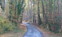 Chemin de forêt de Civray de Touraine
