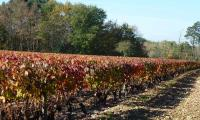 Vigne de Civray de Touraine