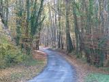 Campagne en forêt de Civray de Touraine
